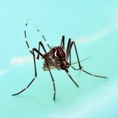 Summer is West Nile virus season in San Mateo County