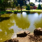 Civic Center Pond Cleaning Scheduled for Sept. 18