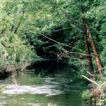 Workshops and field trip for the San Francisquito Creek upstream creek improvements