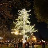 Gather around the Menlo Park Holiday Tree