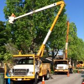 Routine street and park tree maintenance in progress