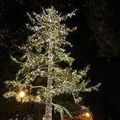 Fremont Park tree with lights