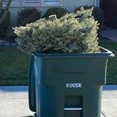 christmas tree in green compost bin
