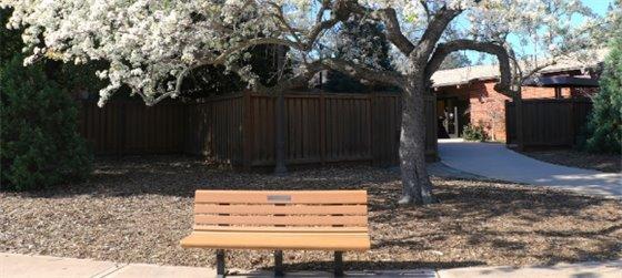 Empty bench beneath a tree outside the Arrillaga Family Recreation Center