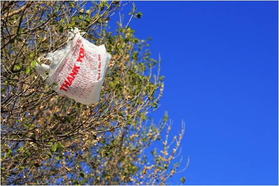 Plastic bag stuck in a tree