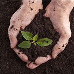 Earth-Day-2019-hands-in-soil-plant